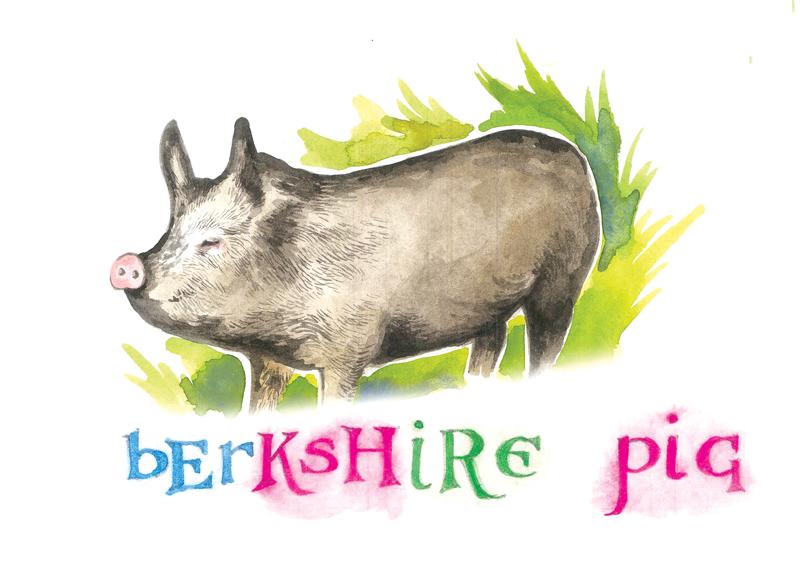Berkshire Berksire Pig